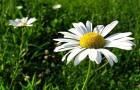 5 трав, которые легко справятся с бессонницей