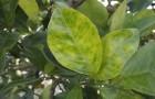 Как один запах меняет жизнь четырех видов