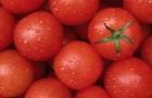 Лучшие овощи и растения для защиты от солнечных ожогов