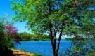 Мемориальный сад Линкольна