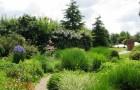 Органический сад Райтона