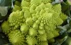 Уникальные овощи, которые внесут разнообразие в ваш сад