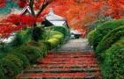 Сад Киото