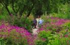 Сады Ачамор