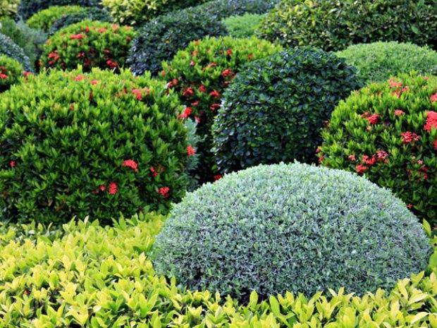 Сады Броэдлис