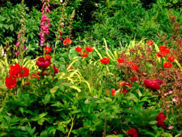 Сады Хайдаун