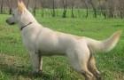 Соломенная собака