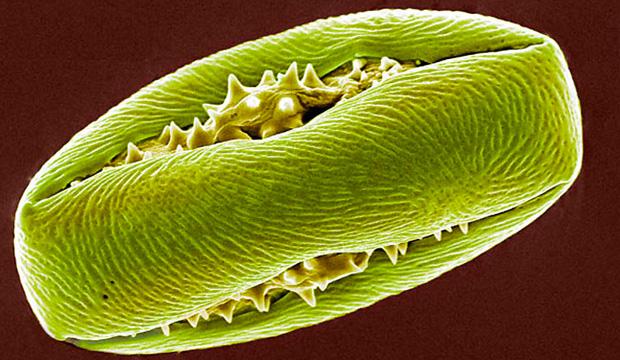 Тайна размножения растений раскрыта