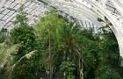Викторианские сады с папоротниками Аског-холл