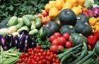 Хранение урожая овощных культур