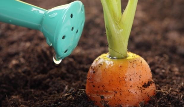 Орошение овощных культур
