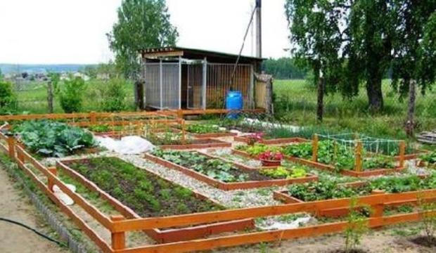 Выбор участка для овощных культур