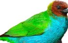 Зелёная танагра