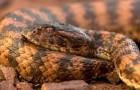 Змея смертельная