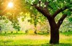 11 февраля 2015 года: спиливаем кроны деревьев