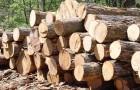 12 февраля 2015 года: как распорядиться древесиной