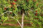 12 марта 2015 года: удобряем плодовые деревья