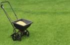 13 июля 2015 года: удобряем газон