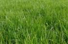 23 апреля 2015 года: восстанавливаем газон