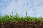 9 августа 2015 года: начинаем готовить почву