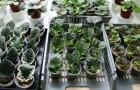 1 сентября 2014 года: растения из сада на подоконник