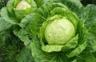 Какие овощи есть в первую очередь или опасные последствия дефицита витамина А
