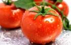 Результаты оценки девятнадцати сортов томатов