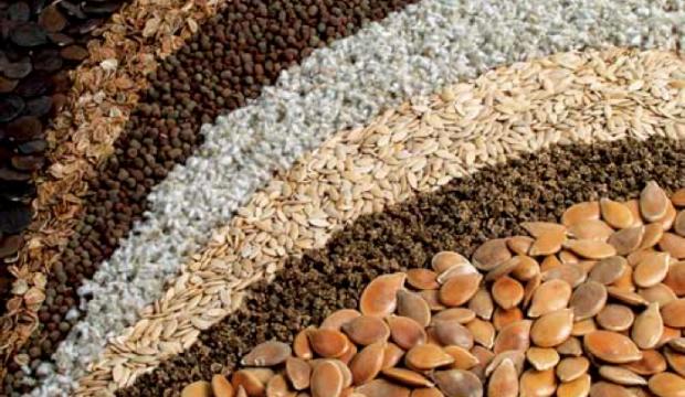 Сохранение семян – путь к спасению растений во всём мире