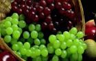 Виноград помогает при нейродегенеративных заболеваниях