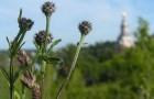Чему можно поучиться у самоудобряющегося сорняка