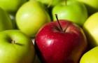 Генетически редактируемые яблоки и другие фрукты