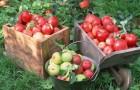 Инновационный способ увеличения цветов, семян и плодов