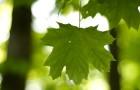 Из-за устаревшего фотосинтеза растения не успевают за изменениями в мире