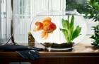 Как вырастить зелень и помидоры при помощи золотой рыбки