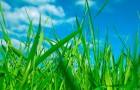 О чём рассказывает запах свежескошенной травы