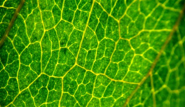 О чём растения говорят при помощи молекул