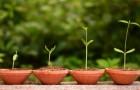 """Схожие основы """"эволюции"""" растений и скрипок"""