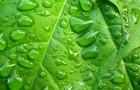 Стресс – залог более сильного потомства у растений