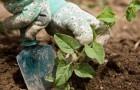 Терапия садоводством, проверенный наукой способ снять стресс