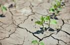 Ученые научат растения копить воду на случай засухи