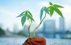 Учёные недооценивали уровень поглощения СО2 растениями