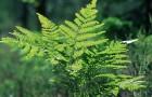 Адаптация растений к экстремальным условиям