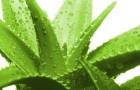 Как дозволительно совладать не без; перхотью близ помощи растений