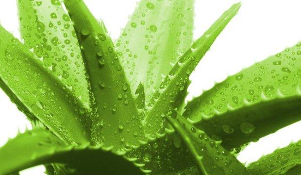 Как можно справиться с перхотью при помощи растений