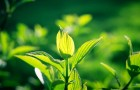 Как растения спасаются от загара