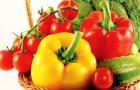 Как томаты и перцы накапливают каротин
