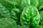 Овощи, которые можно выращивать даже зимой