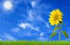 Почему растения не получают солнечные ожоги