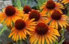 Противовирусные травы, витамины и минералы