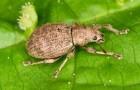Звуки и запахи могут заменить пестициды в борьбе с вредителями